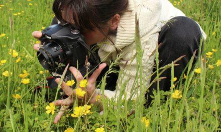 Près de 90 000 Français se sont impliqués en 2018 dans des opérations de sciences participatives liées à la biodiversité